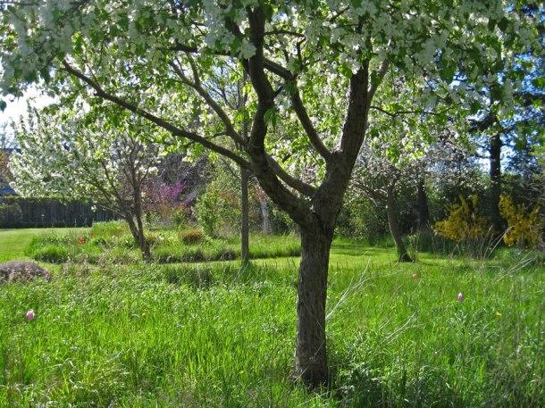 orchard_e